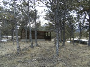 After pruning.  Cabin is now visible. Deer will love this!