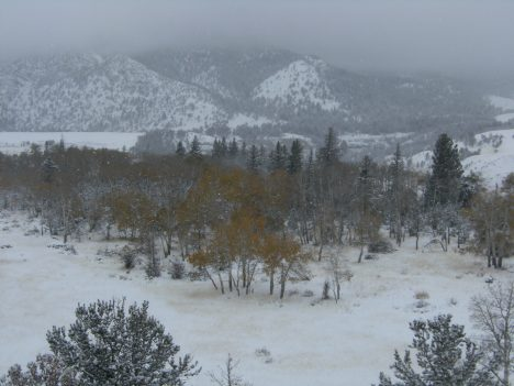 Changing Aspens after a October snowstorm