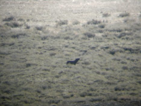 This is through the scope.  He was way across the Lamar river.