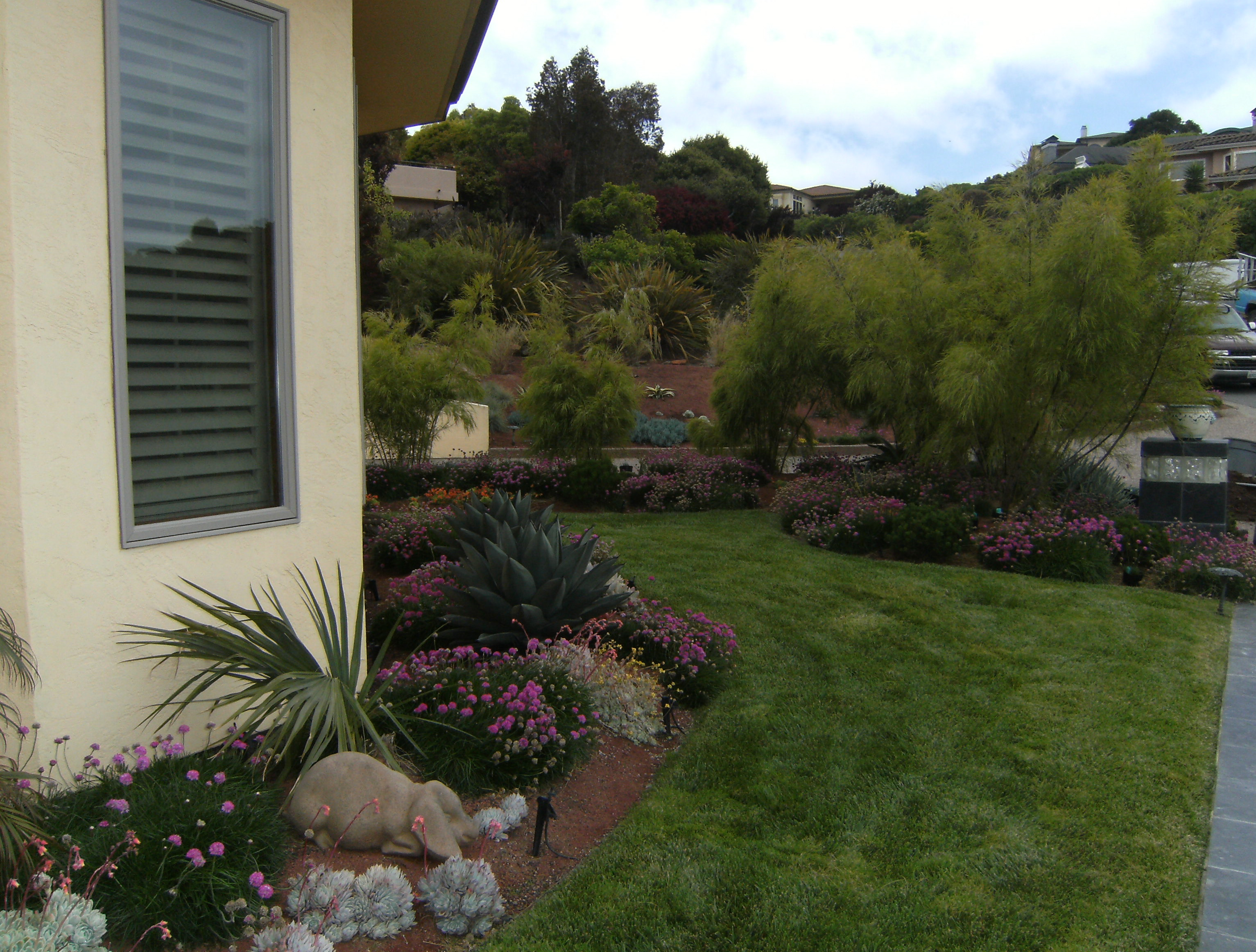 Except the small lawn, the beds are all low water, mostly succulents/natives
