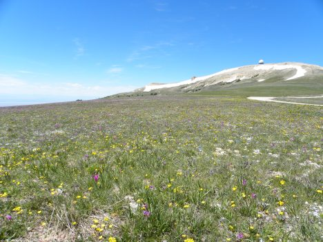 High altitude meadow