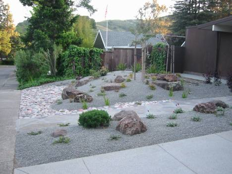 Arctostaphylos 'Woods Compact' right after install