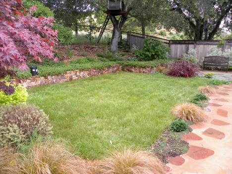Carex lawn with small plants as edging