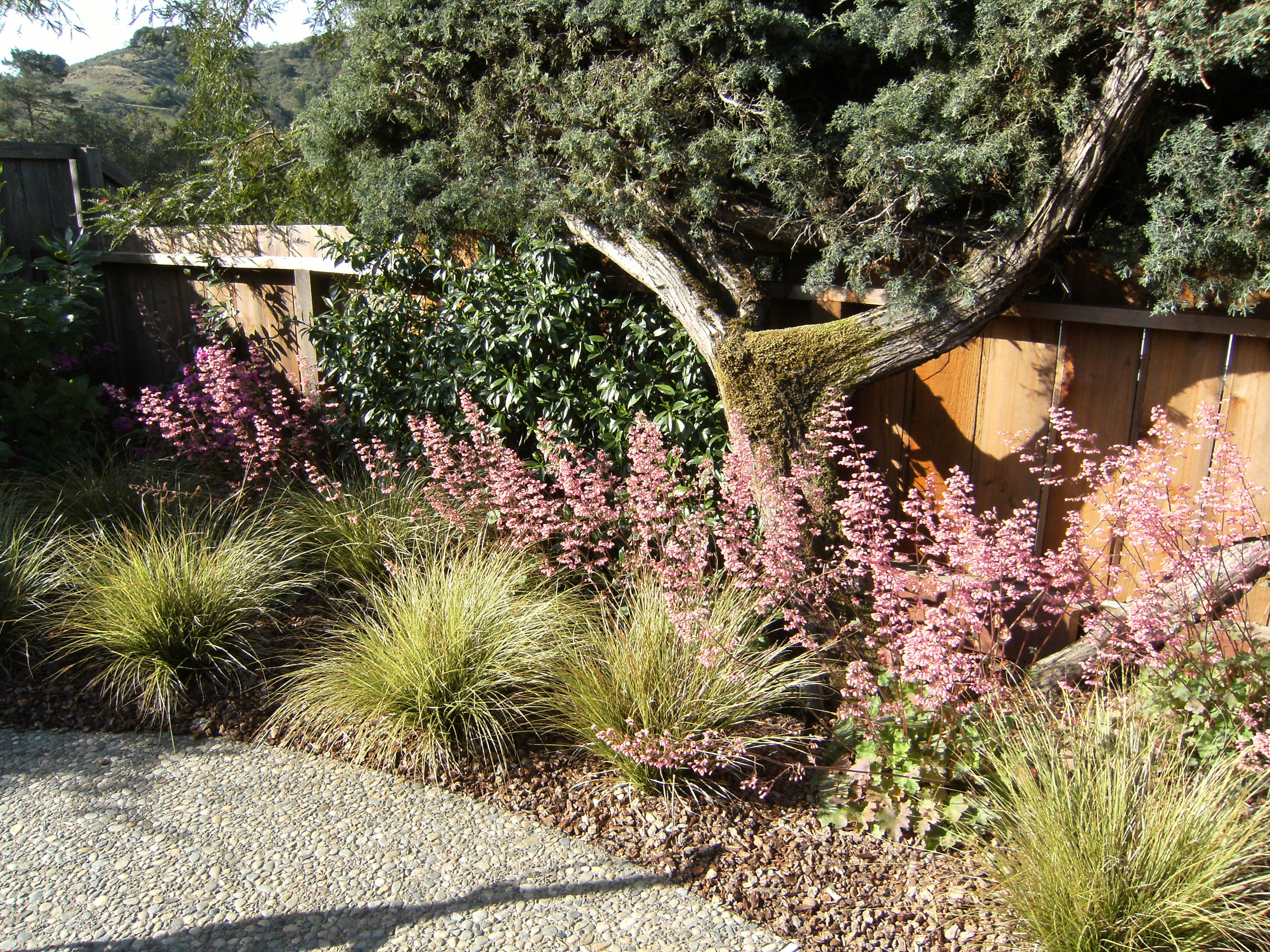 More great, reliable plants for California landscapes | The Human ...