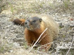 Marmot lets us get very close