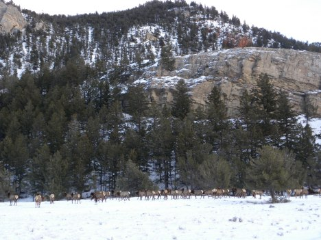 elk and snow
