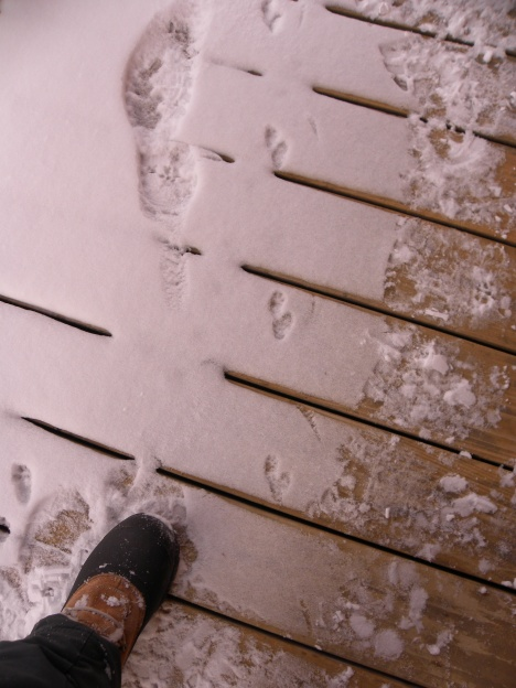 These are really clear weasel tracks on the porch