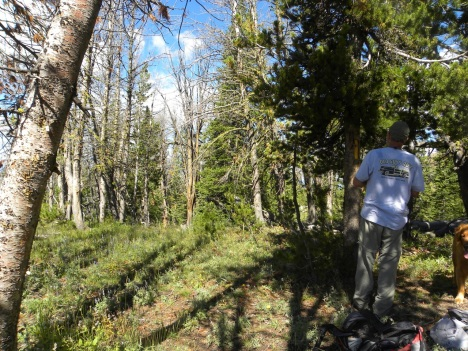 At least 75% of this Whitebark forest is dead; in other places on Windy it is more like 90%