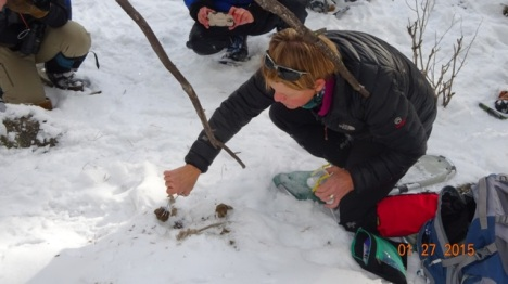 Collecting cougar scat the scientific way with tweezers