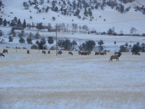 Coveted elk habitat on property that could be a subdivision