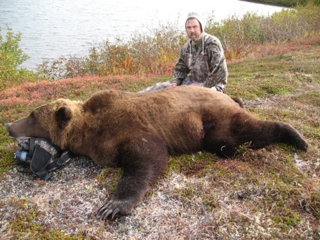 2011_bervik_brown_bear20on20ground