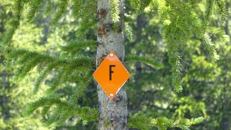 Trail sign. What does an 'F' mean? Anyone know?
