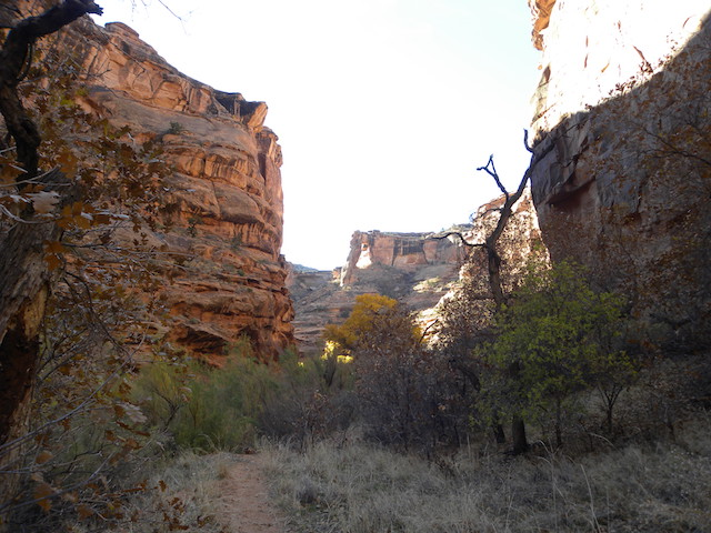 Canyon in Moab